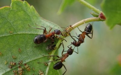 Highways England working to save super rare ants on brink of extinction