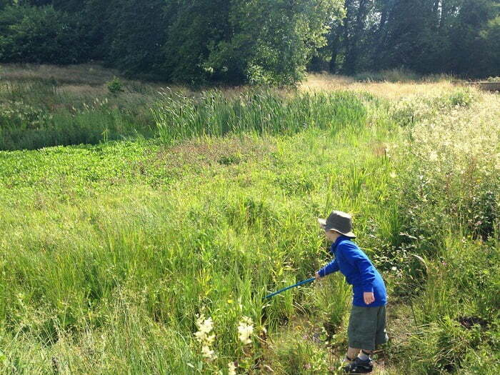 Landscape Institute launches biosecurity toolkit to help landscape consultants protect UK ecosystems